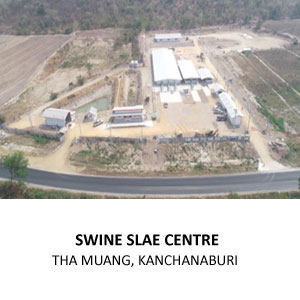 SWINE SALE CENTRE FOR INTEQC GROUP